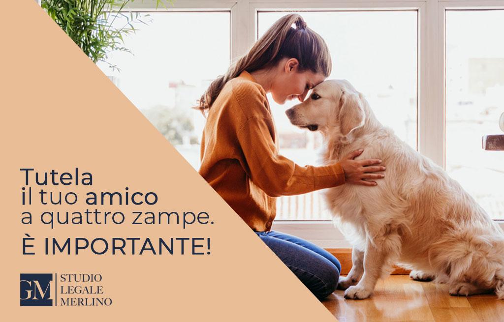 Assicurazione cani: tutelare se stessi ed il proprio amico a quattro zampe
